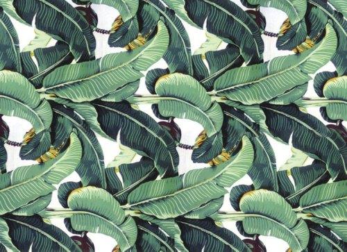 martinique-wallpaper-palm