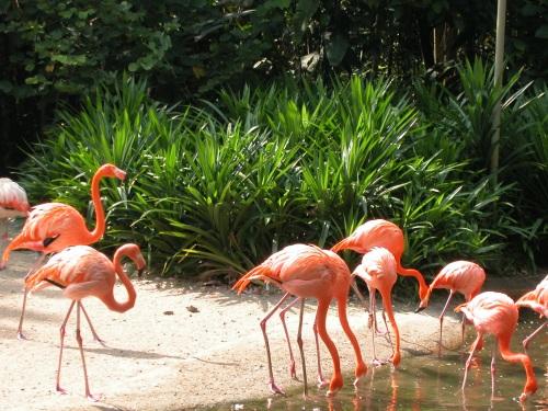 flamingo-10