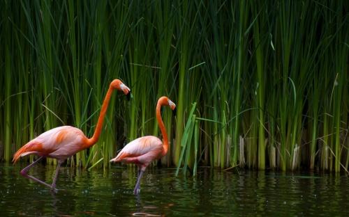 flamingo-5