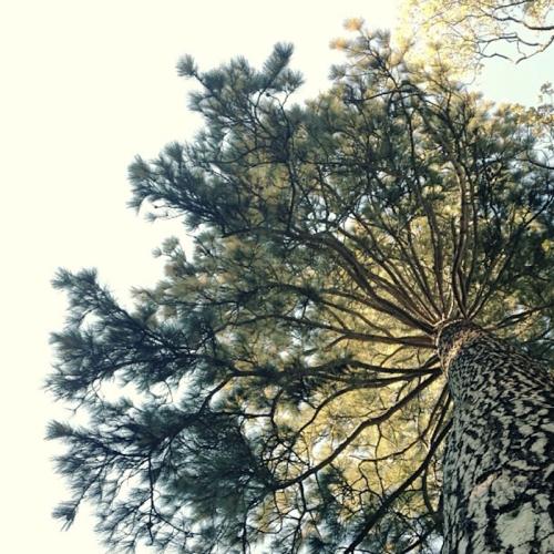 Screen Shot 2013-10-25 at 11.58.55 AM
