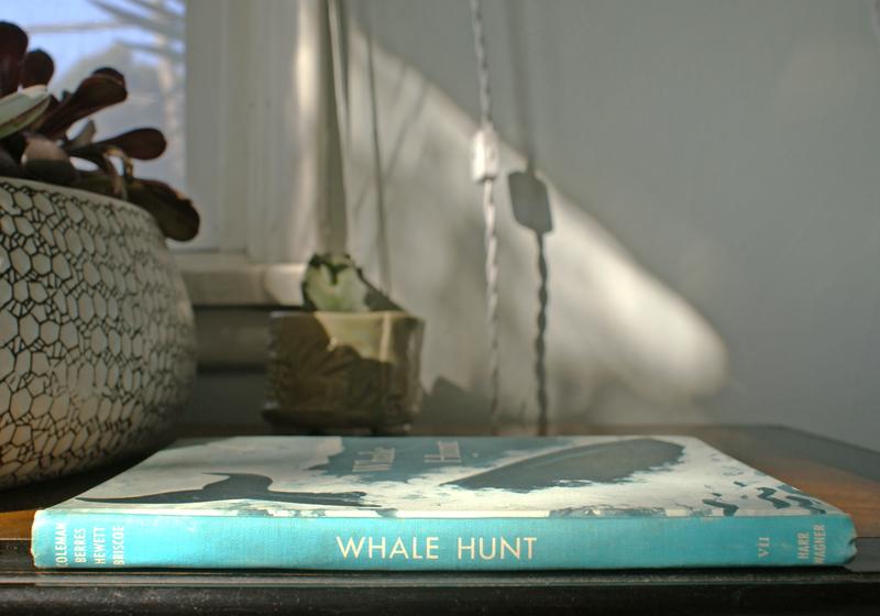 whale-book