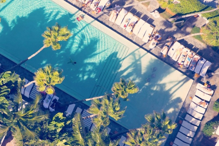 Poolside_Palm_Trees_4